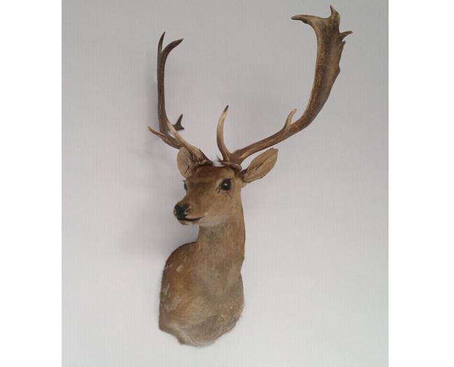 相关动物形态系列造型工艺品及进口真皮毯,拼毯,抱枕等,包括标本,树脂